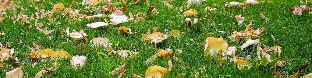 Autumn Lawn Feed