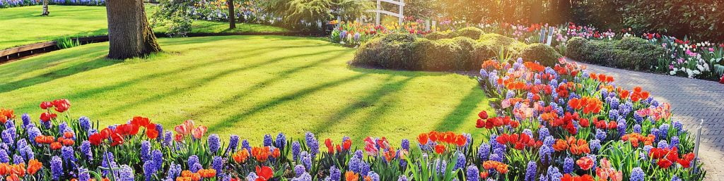 Early Spring Lawn Feed