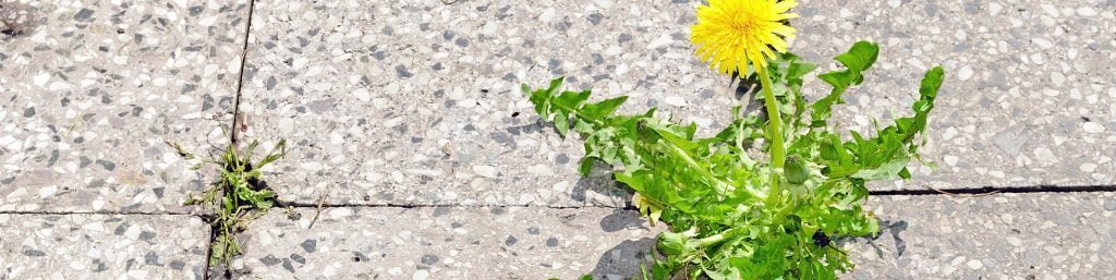 Hard Surfaces Weed Control