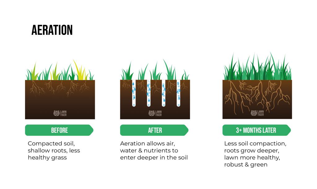 Lawn Aeration benefit illustration