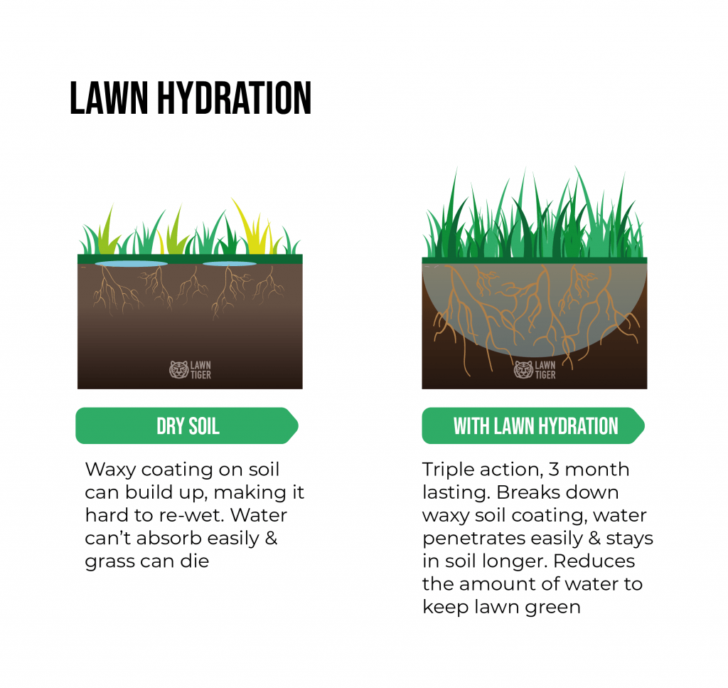 Lawn Hydration service explanation illustration