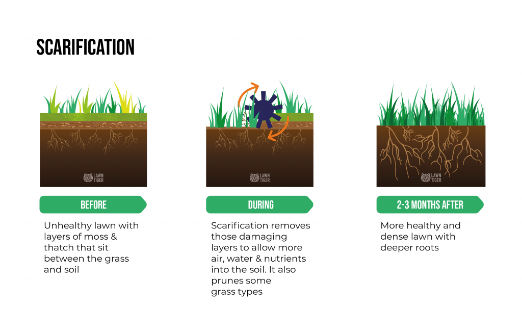 Lawn scarification explanation illustration