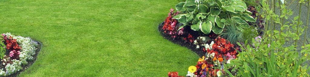 Summer Lawn Feed