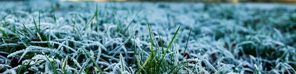 Winter Lawn Treatment & Moss Control