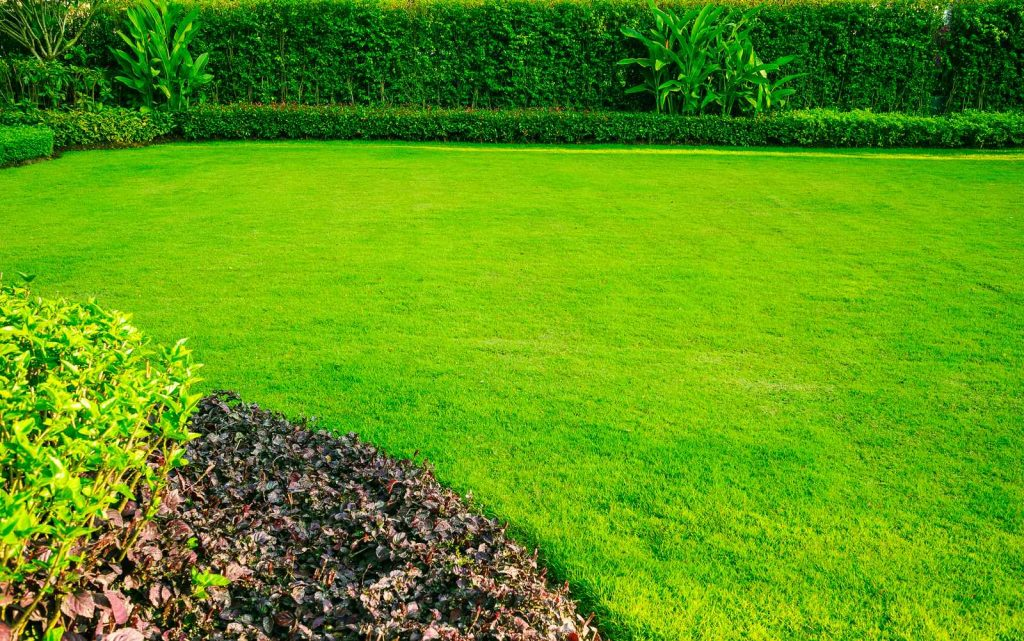 bright green lawn improver