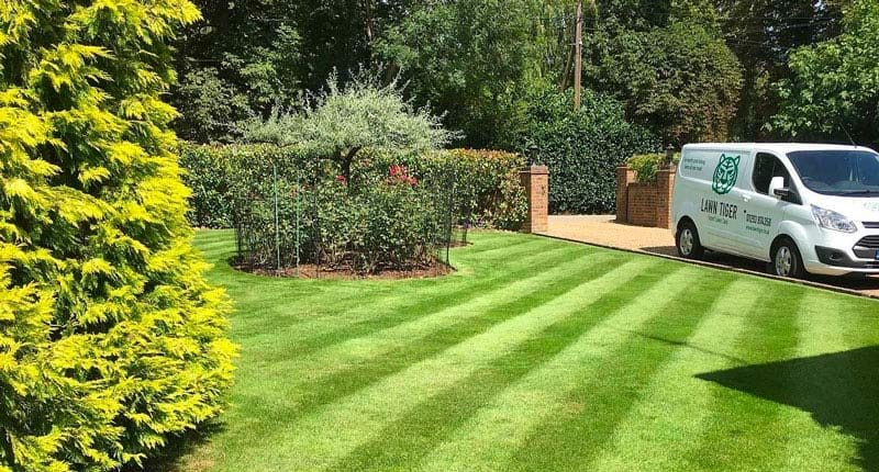 Beautiful Lawn with Stripes