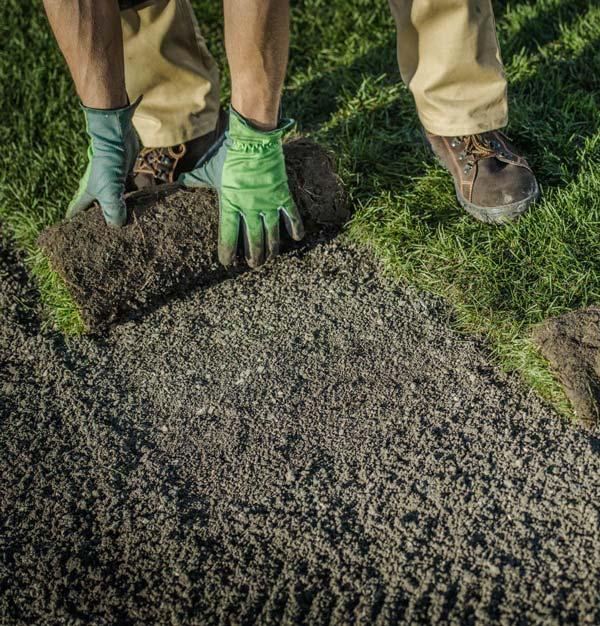 Lawn technician laying turf