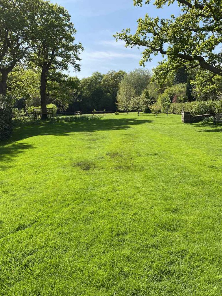 renovated lawn in good condition