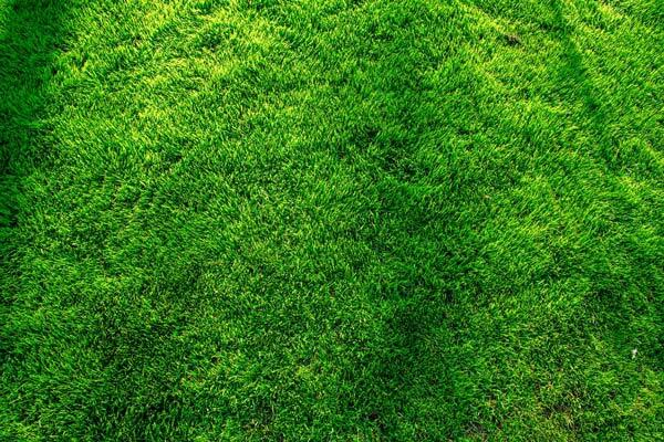 Beautiful Green Lawn