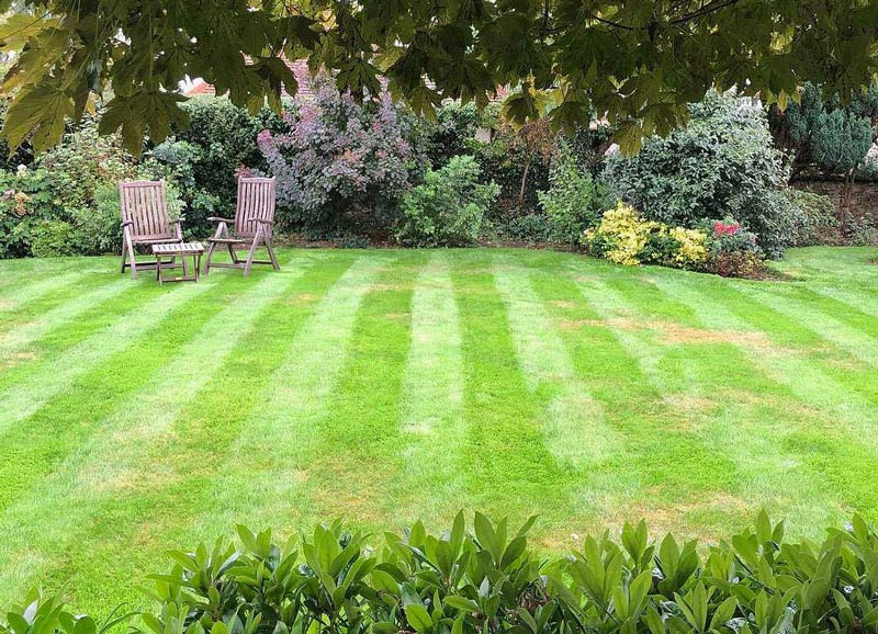 Lush Country Lawn in Surrey